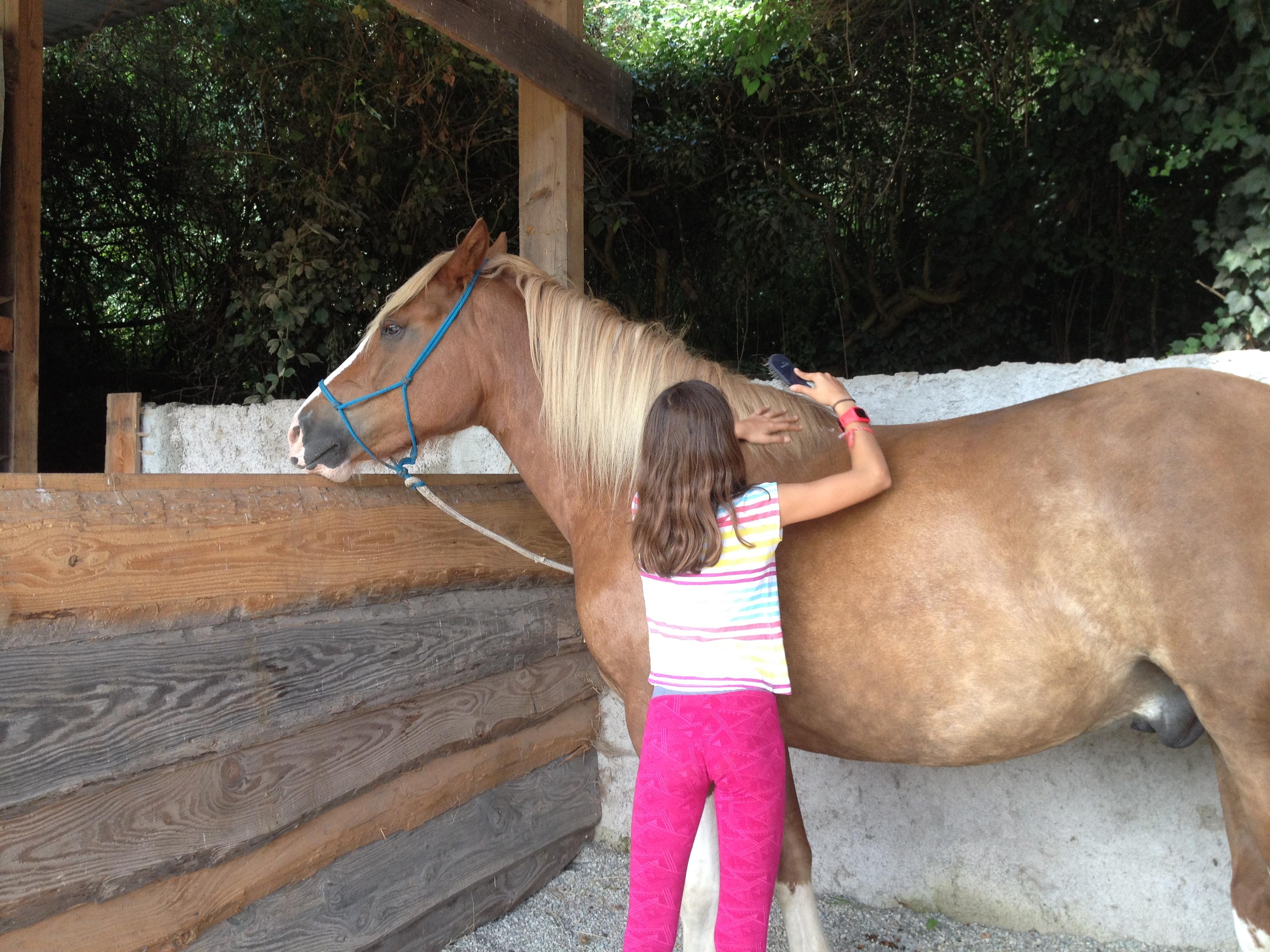 Avant de faire une activité avec un cheval, on prend un premier contact en le brossant